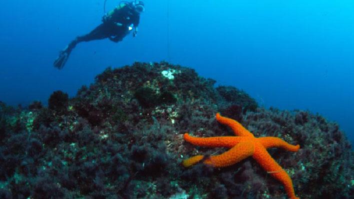 PLANET OCEAN HENDAYE